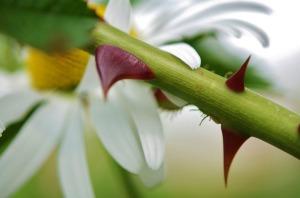 flower-832217_1280