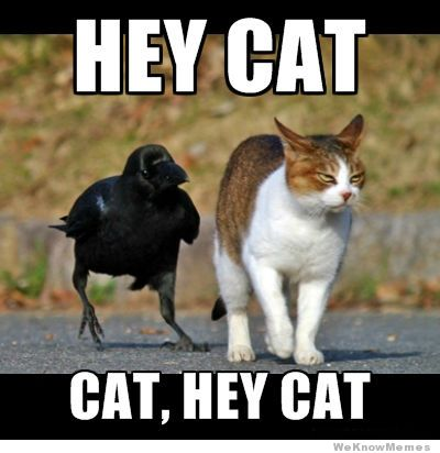 hey-cat-cat-hey-cat.jpg